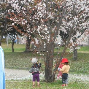 3/29 大井中央公園 (7)